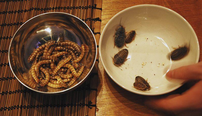 Hyönteisistäkö ratkaisu ruokapulaan?