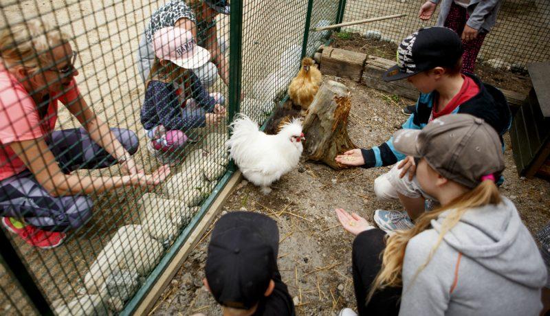 Green Care: Aasi ja kana kasvattajina