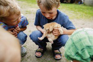 Veikko ja Markus leikkivät pihalla kissanpennun kanssa.