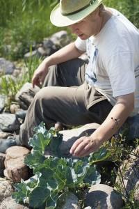 Merikaalin maku on hieno, mutta sen toivossa yksinäiset kasvit pitää jättää verottamatta. Noudata kohtuutta!