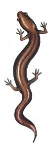 Kuva Eläinten sukupuu -kirjasta.