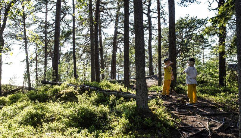 Jos metsään haluat mennä nyt… niin mene!