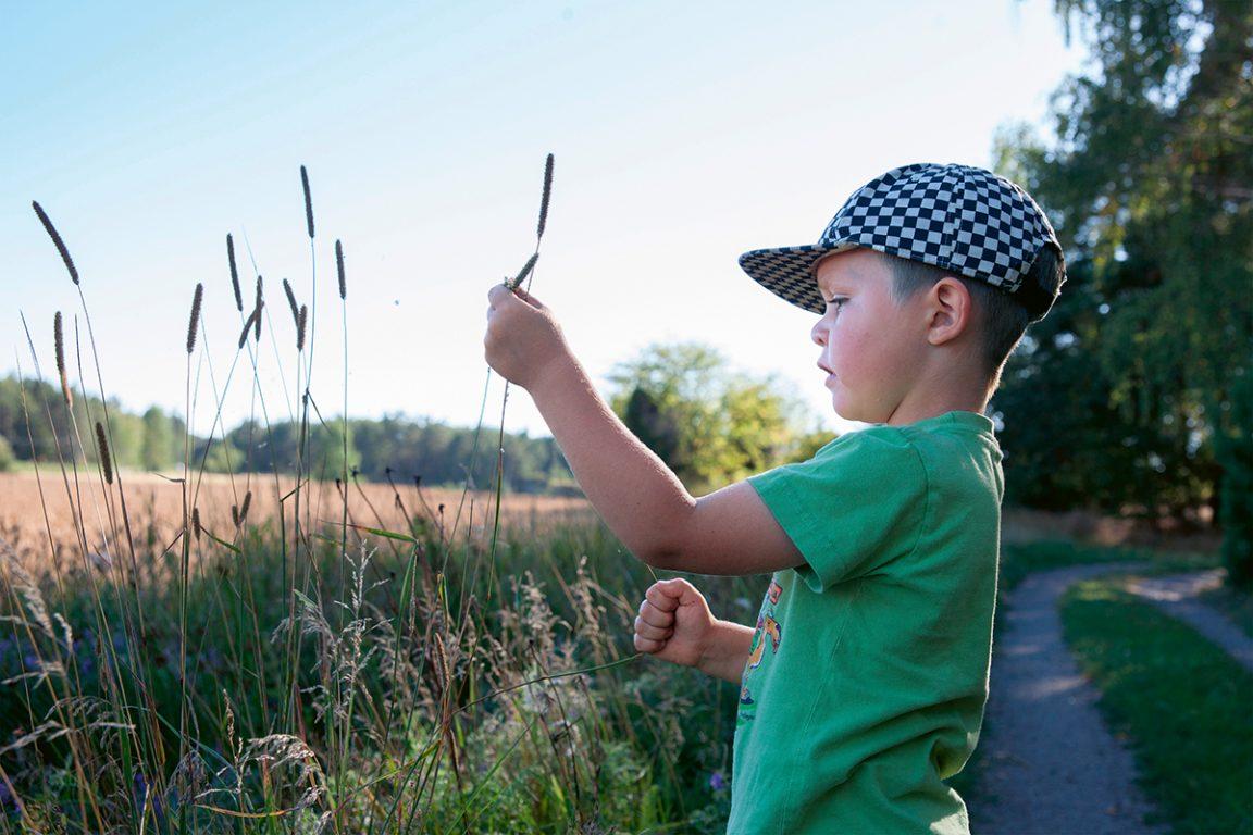 Lippispäinen pieni poikaa ihmettelee käsissään pellolla kasvavaa heinää kesäisessä maisemassa.