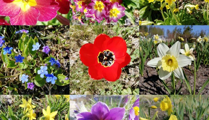 Kahdeksantoista kukkaa