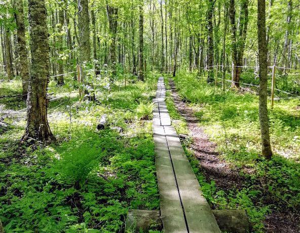 Luontosuhde syvenee pysähtymällä ja katselemalla