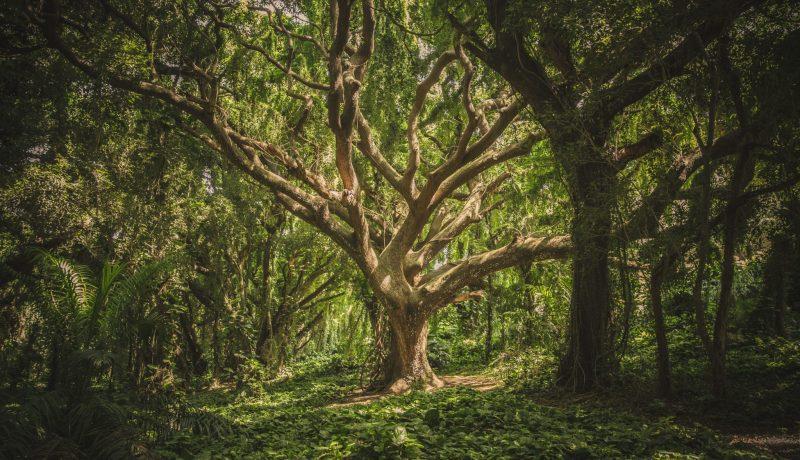 Ole kuin puu – kirjoitusharjoitus Sinulle taakankantaja