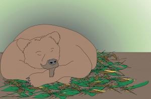 Karhu nukkuu. (Piirros Jukka Tuononen, Kuopion luonnontieteellinen museo)